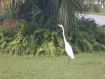Wildlife at Treasure Cay