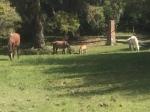 more horses